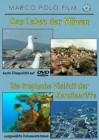 Das Leben der Möwen/tropische Vielfalt der Korallenriffe