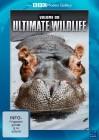 BBC Motion Gallery Ultimate Wildlife - Vol. 9 Wälder & Afrika